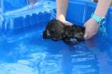 Marzipan swimming (35)