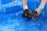 Marzipan swimming (36)