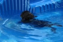 Marzipan swimming (4)