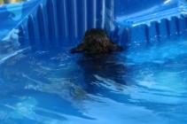 Marzipan swimming (5)
