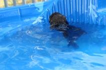 Marzipan swimming (6)