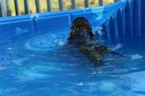 Marzipan swimming (7)