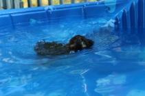 Marzipan swimming (8)