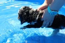 Mongo swimming (2)