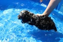 Mongo swimming (4)