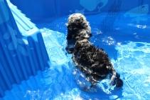 Mongo swimming (5)