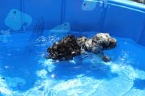 Mongo swimming (6)