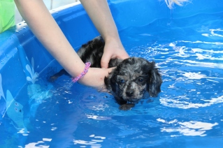 Pistachio swimming (13)