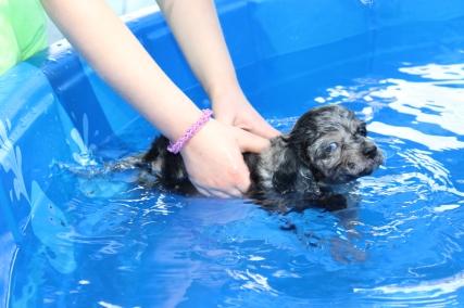 Pistachio swimming (14)