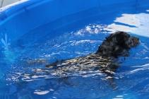 Pistachio swimming (15)
