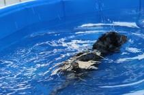 Pistachio swimming (16)