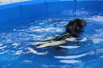 Pistachio swimming (17)
