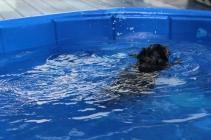 Pistachio swimming (18)