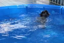 Pistachio swimming (19)