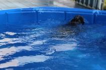 Pistachio swimming (20)