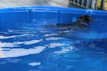 Pistachio swimming (21)