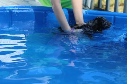 Pistachio swimming (22)