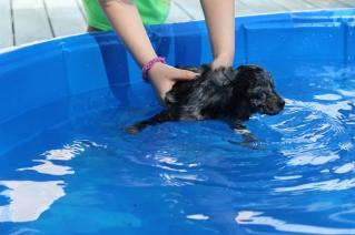 Pistachio swimming (23)