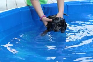 Pistachio swimming (24)