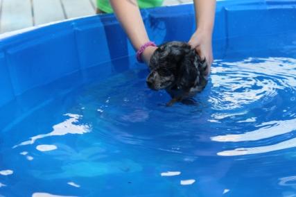 Pistachio swimming (25)