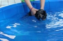 Pistachio swimming (26)