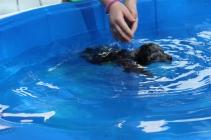 Pistachio swimming (27)