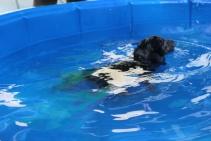 Pistachio swimming (28)