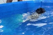 Pistachio swimming (29)