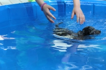 Pistachio swimming (30)