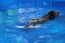 Pistachio swimming (31)