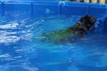 Pistachio swimming (32)
