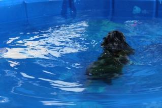 Pistachio swimming (34)