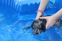 Pistachio swimming (37)