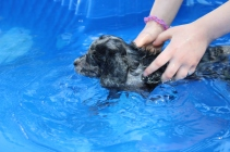 Pistachio swimming (38)