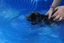 Pistachio swimming (39)