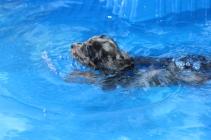 Pistachio swimming (40)