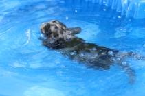Pistachio swimming (41)