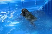 Pistachio swimming (42)