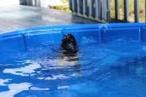 Pistachio swimming (43)