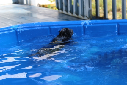 Pistachio swimming (44)