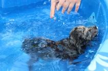 Pistachio swimming (48)