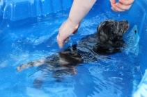 Pistachio swimming (49)