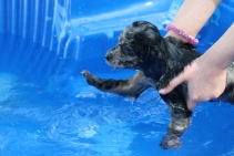 Pistachio swimming (50)