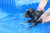Pistachio swimming (51)