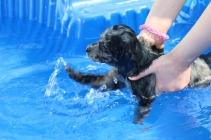 Pistachio swimming (54)