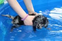 Pistachio swimming (6)