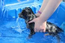 Pistachio swimming (62)