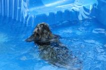 Pistachio swimming (64)
