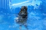 Pistachio swimming (65)