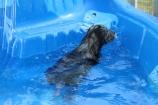 Pistachio swimming (66)